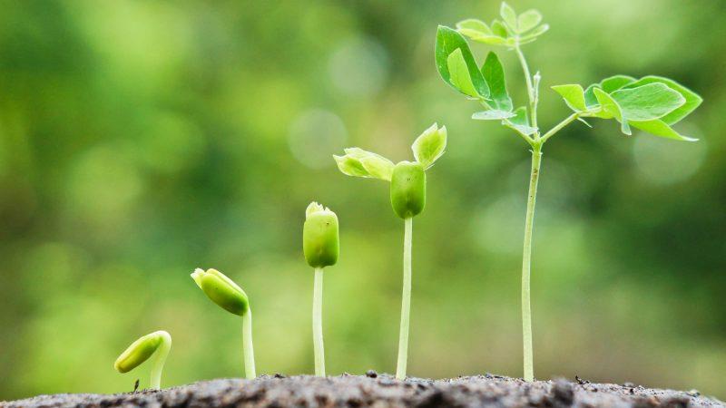 growth wordpress